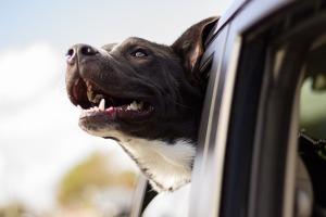 dog-smiling