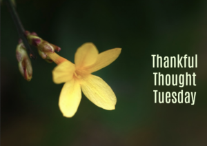thankful tuesday