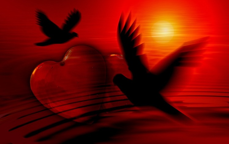 love doves holy spirit