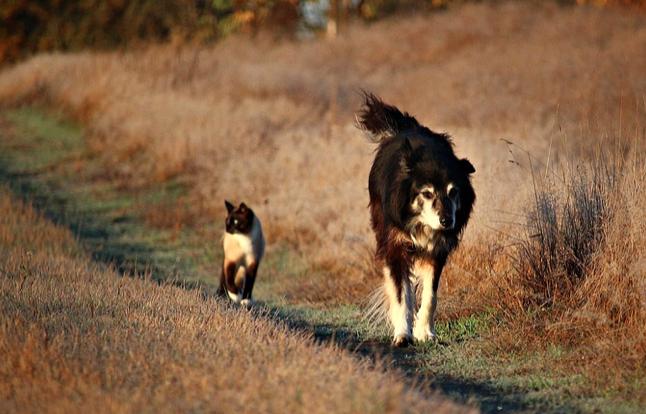dog and cat pet